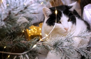 white-and-black-cat-beside-christmas-tree-with-string-lights-1645768